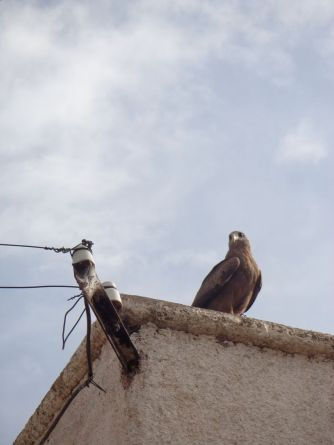 Hello Hawk!