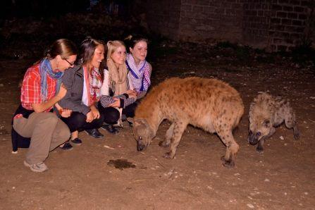 The Gang + Hyenas